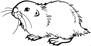 Small Picture North American Wildlife Coloring Pages On North Images Free