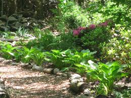 five years ago my woodland garden was not a garden at all it was a jungle of wild sumac aggressive vines and t brambles you couldn t pass through