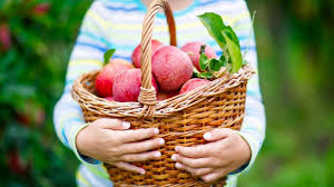 Diese Vitamine Machen Den Apfel Zum Idealen Snack