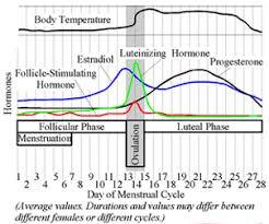 13 Prototypical Understanding Ovulation Chart