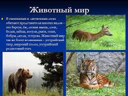 Презентация на тему Природная зона смешанных и широколиственных  7 Животный