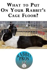 the bottom of a rabbit cage rabbit