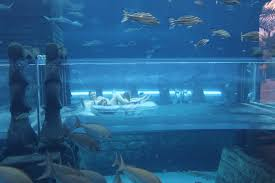 underwater water slide.  Slide Atlantis_aquaventure_dubai_IMG_1304JPG In Underwater Water Slide R
