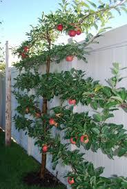 Best Backyard Trees  CT OutdoorGood Trees For Backyard