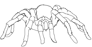 Small Picture Tarantula Coloring Page Desert Animals Coloring Pages Desert