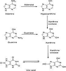 Uric Acid In Plants And Microorganisms Biological