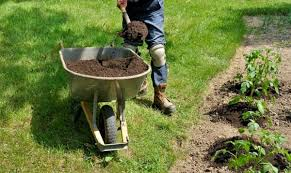 garden compost. Interesting Compost Using Compost By Applying It To The Garden Shoveling From Wheelbarrow For Garden Compost H