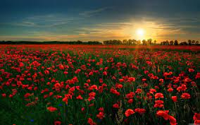 Red, Flower, Garden - Free Stock Photos ...