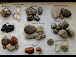 Beachgoers Guide To Lake Michigan Fossils And Rocks Field