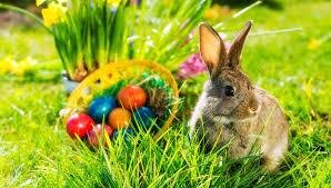 Пасха в Германии красят ли немцы яйца и что прячет Пасхальный заяц  Что прячет Пасхальный заяц