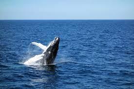 ปลาวาฬนอนหลับอย่างไร - คำถามสำหรับเด็ก - หน้าสีฟรี