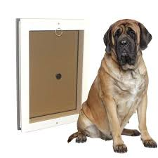 dog doors freedom pet pass dog door