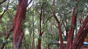 Image result for Tropical Spice Garden