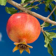 50 Best Fruit Nurseries Images On Pinterest  Fruit Trees Fruit Non Gmo Fruit Trees For Sale