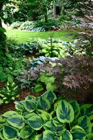 shade garden use of japanese painted fern athyrium nipponi pictum