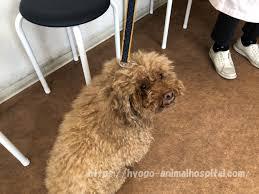 犬 クッシング 症候群 末期 症状