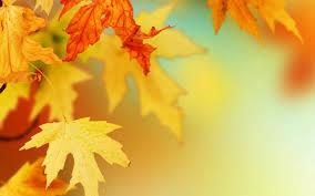 黄色の紅葉の壁紙
