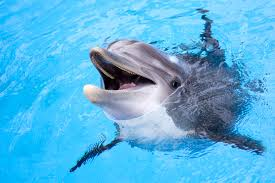 Is Swimming With Dolphins Cruel? • The Planet Edit