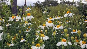 there s always something to see at descanso gardens whether you love lots of colorful spring bloom winter camellias or the year round majesty of our oaks