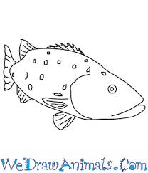 bass fish drawing step by step. Plain Step For Bass Fish Drawing Step By R