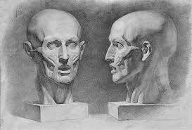 face anatomy face anatomy anatomy master class anatomy master class