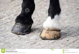 De Hoeven Van Het Paard Stock Foto Afbeelding Bestaande Uit Namen