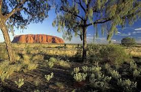Природа растения и животные Австралии Впрочем в Австралии выпадает мало осадков потому рек и озер здесь мало
