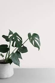 Common houseplants: Beautiful, easy to ...