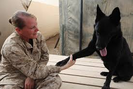 Patrol and explosive dog handler   Cpl. Ashley A. Entrikin, …   Flickr