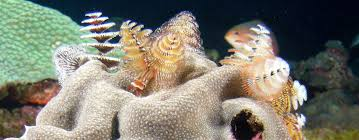 Getting To Know The Christmas Tree WormChristmas Tree Worm Facts