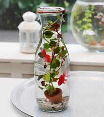 glass bottle with aquatic 2 artificial goldfish plant