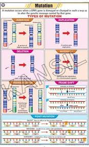 Mutation For General Chart