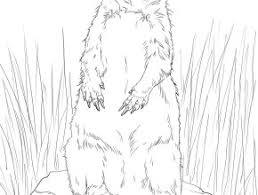 Small Picture Prairie Dog Coloring Pages To Print Free Coloring Page Today