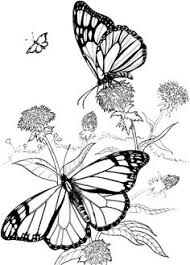 Small Picture Butterfly with Flowers Coloring Pages Butterfly And Flower