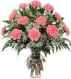phi mu 1 dozen carnations in