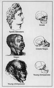 racial heirarchy social darwinism a ed  racial heirarchy social darwinism