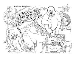 coloring pages of animals in their habitats rainforest african coloring page coloring pages wolf