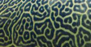 Animal Patterns Impressive Can You Identify These Animal Patterns MNN Mother Nature Network