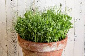 pro tips for growing vegetables in a