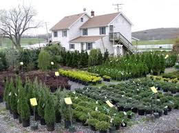 garden nurseries near me. Attractive Innovation Inspiration Garden Nursery Near Me Contemporary Ideas Nurseries