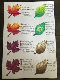 Fall Leaf Color Chart Leaf Colour Chart In 2019 Color Pencil Art Colored Pencil