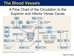Venous Blood Flow Chart The Cardiovascular System Blood Vessels And Circulation