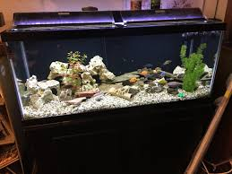 office desk fish tank. Office Fish. Good Night Fish Lovers. It\\u0027s Maybe 5 Of Us In Desk Tank U