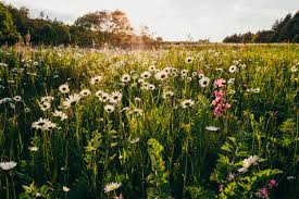 Free Images : landscape, nature, light, plant, sun, field, vintage, meadow,  prairie, retro, sunlight, flower, old, summer, europe, green, golden,  pasture, ...
