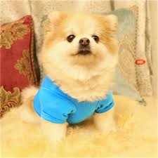 Us 1 43 28 Off Summer Pet Dog Vest T Shirt Easter Dog Clothing 100 Cotton Cute Letter Print T Shirt Small Dog Puppy Costume Clothes 2018 In Dog