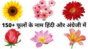 flowers name in hindi and english
