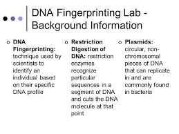 Dna Fingerprinting Lab Answers Bio Rad Forensic Dna Fingerprinting Kit Ppt Video Online Download