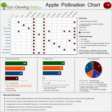 Apple Variety Chart Apple Pollination Chart Infographic Infographics Showcase