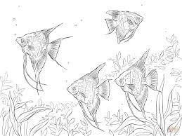 Small Picture Freshwater Angelfishes coloring page Free Printable Coloring Pages