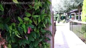 amy and skyler s love story a m gardens azle tx wedding video